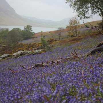 Rannerdale Knotts is looking bloomin' good at the moment